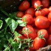 Garden Tomatoes and Herbs